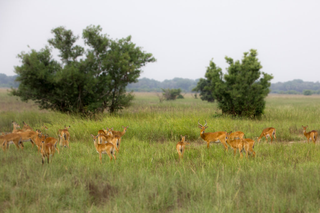 Safari in Pendjari National Park