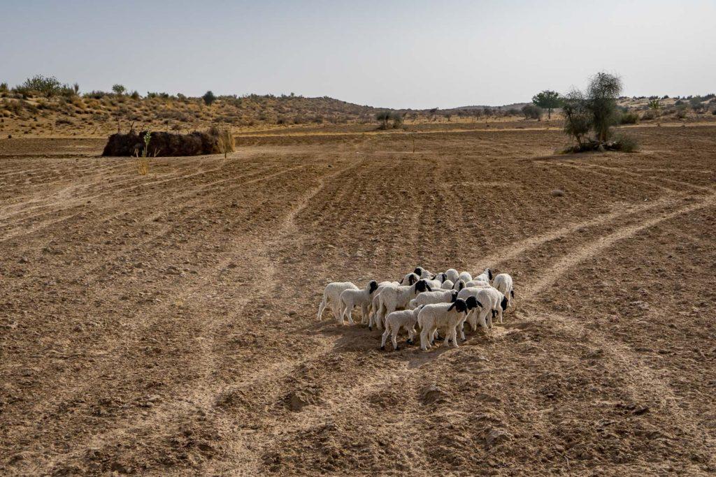 Desert of Jaisalmer