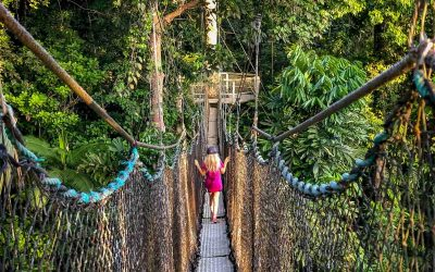 Visiting The Iwokrama Canopy Walkway Guyana (with a Night At Atta Rainforest Lodge)